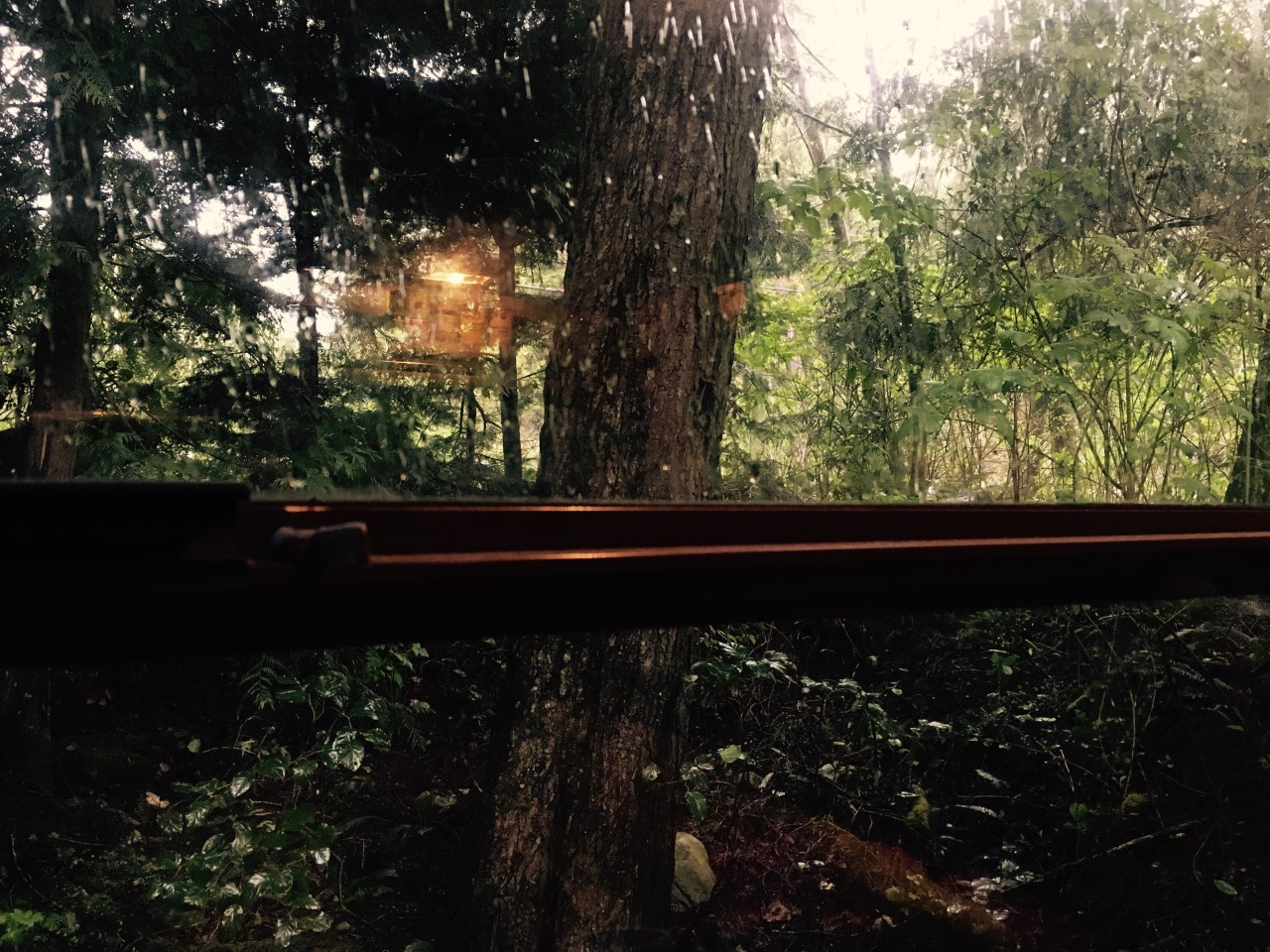 Carly Butler's view from her trailer window (Tofino, BC, Canada) aTE Archive. (Image credit Carly Butler 2017).