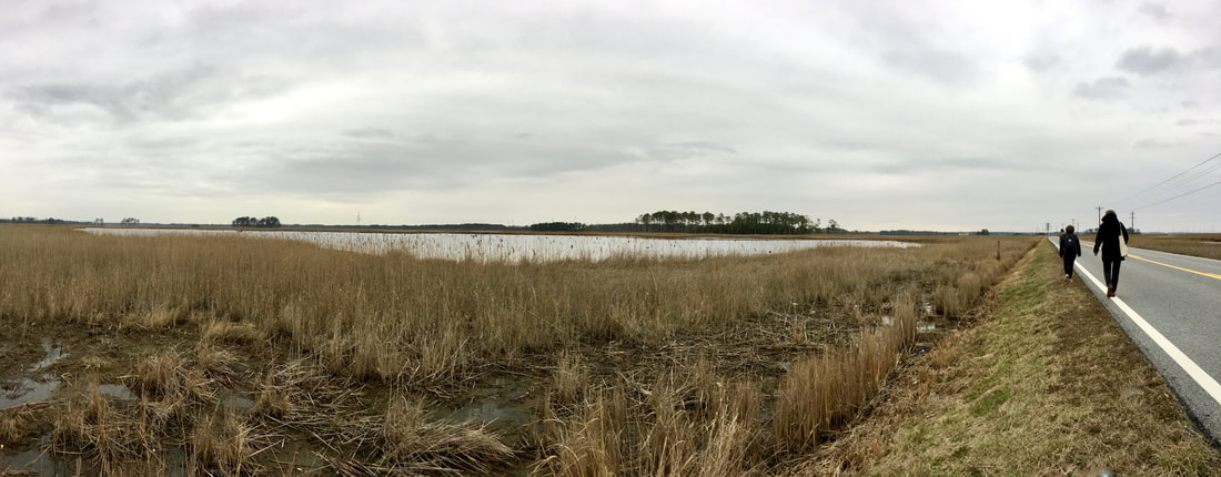 Walking with Carol Maurer, February 2018, Dorchester County, Maryland