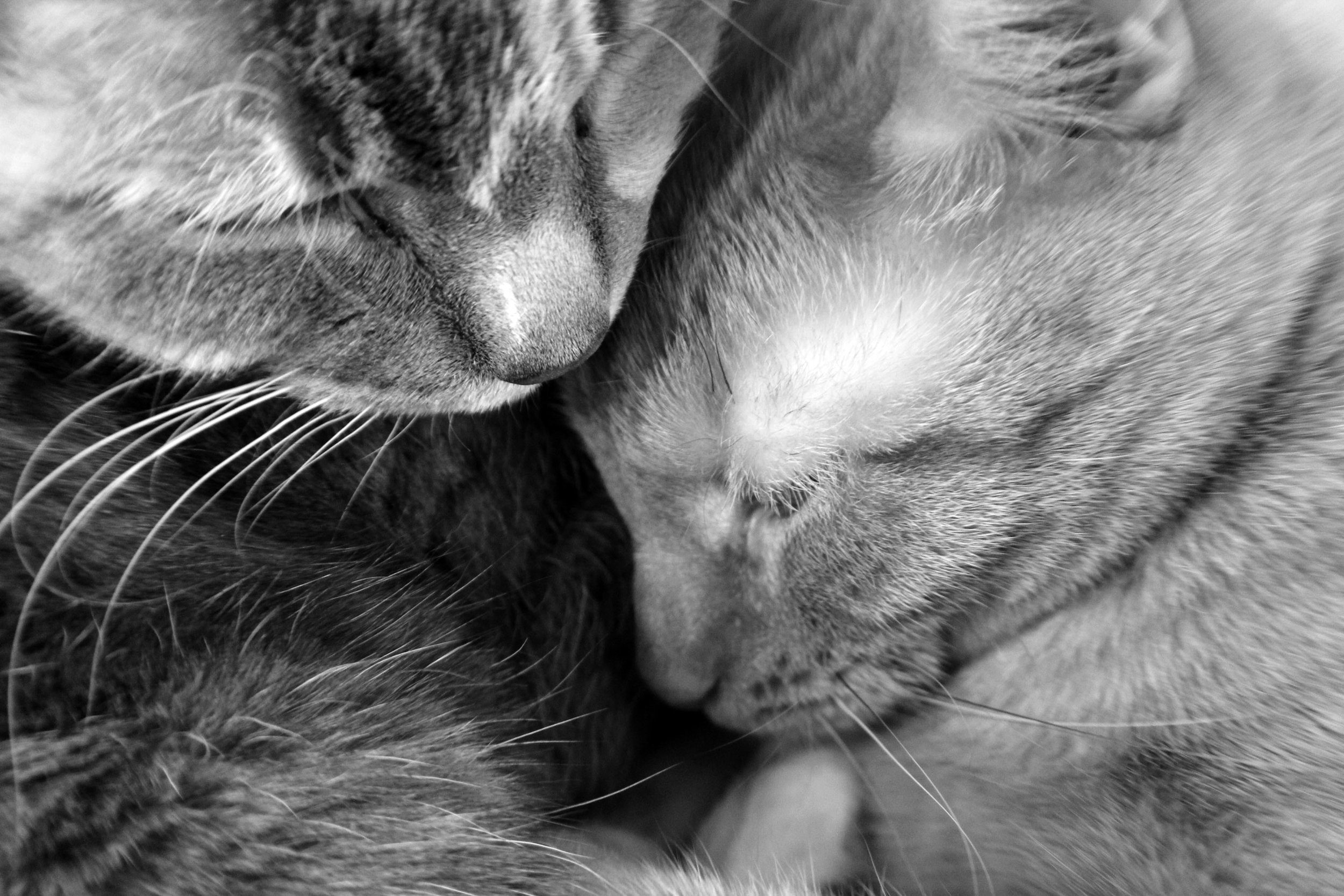 23. WEBSITE - misc. and cats 204 - BW Auto Retouched - 2000 on Vertical.jpg