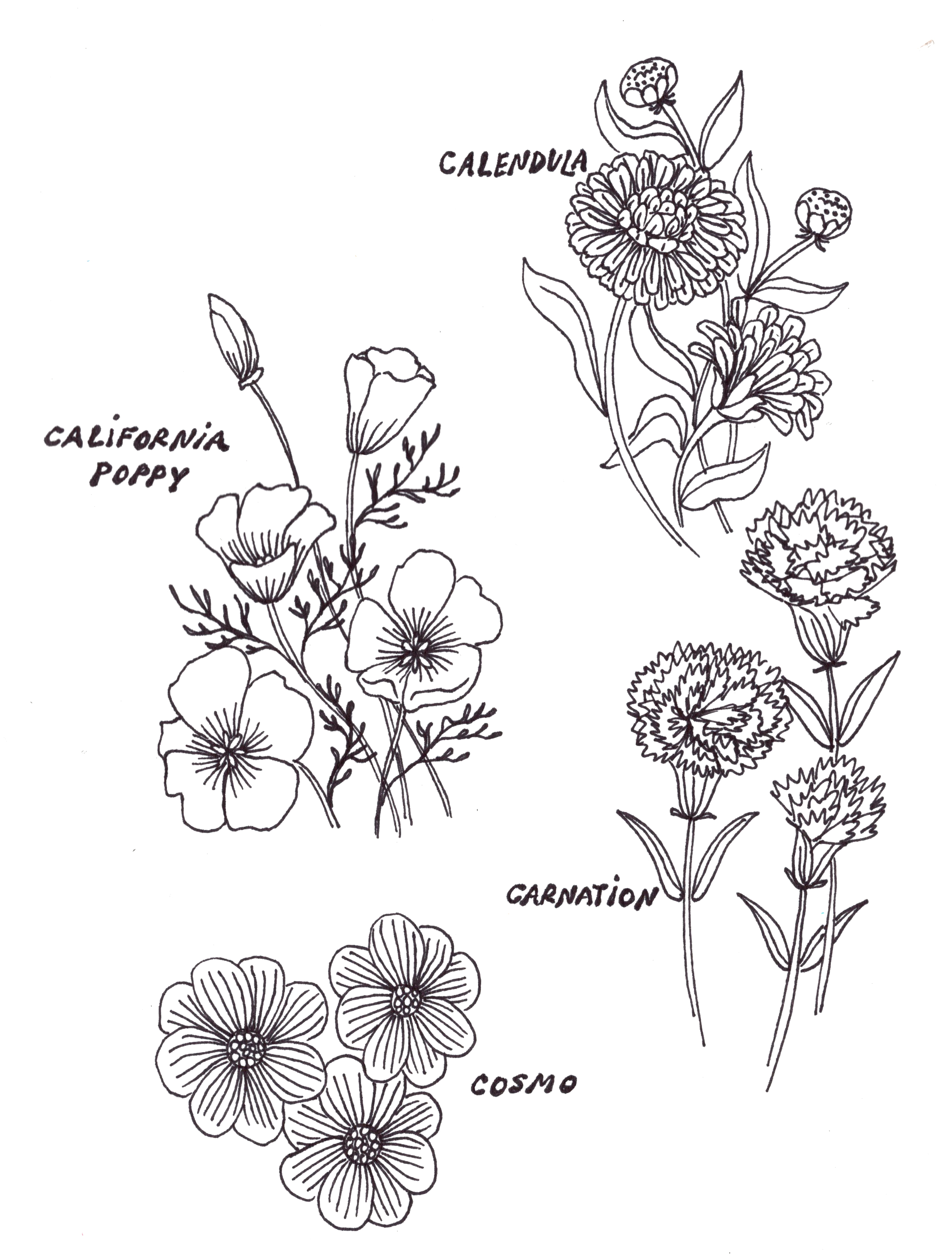 Botanical C.jpg