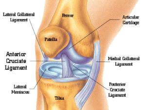 knee-anatomy.png