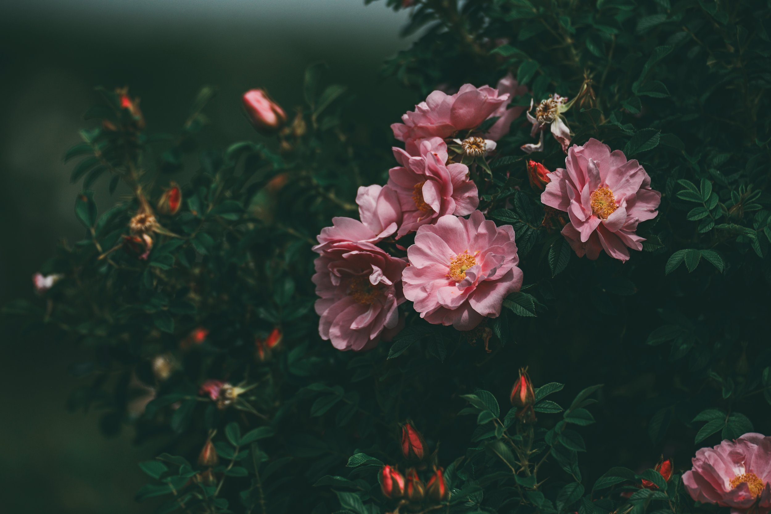 Pink flowers in a dark green forest.