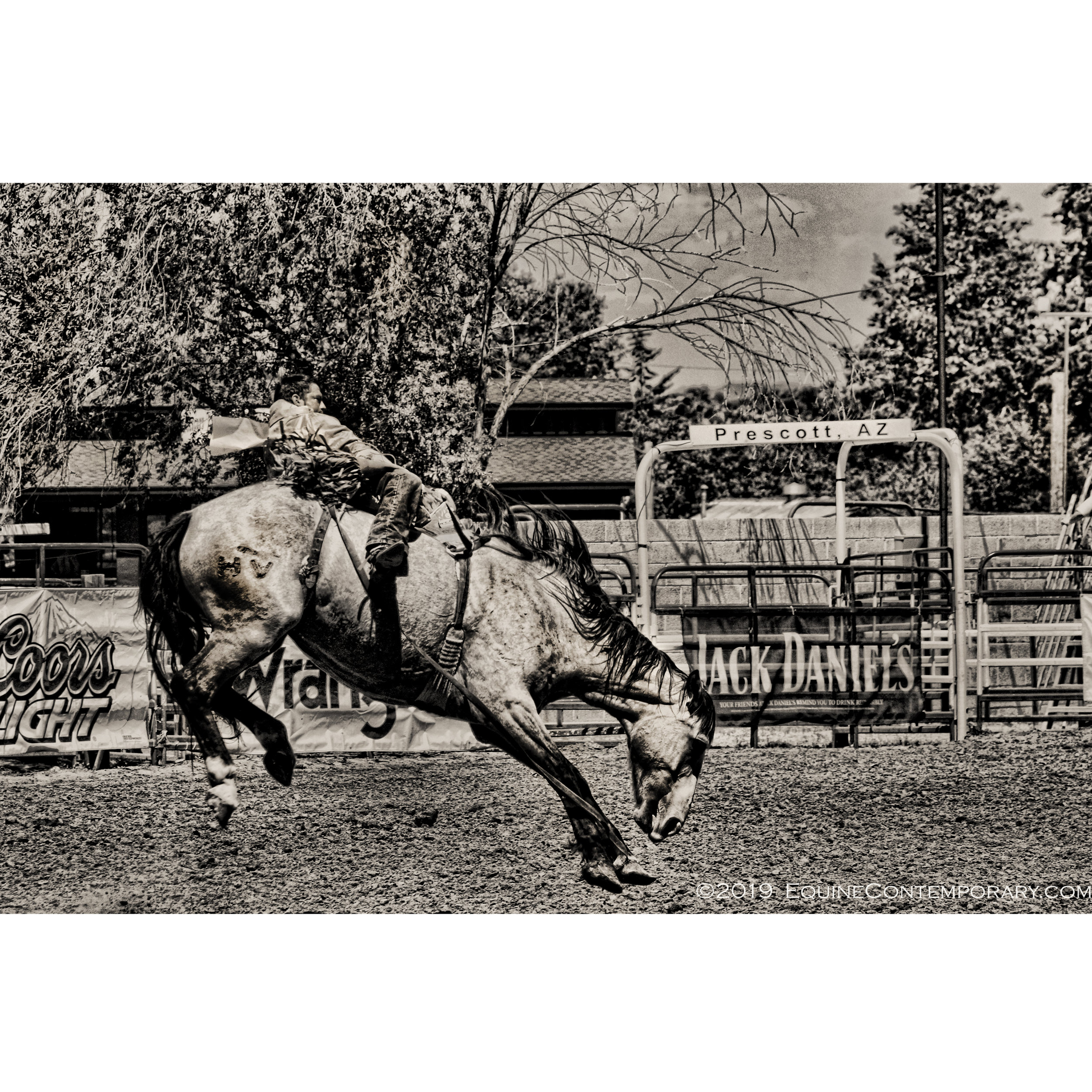 *****SQUARE Prescott Bucking WM.jpg