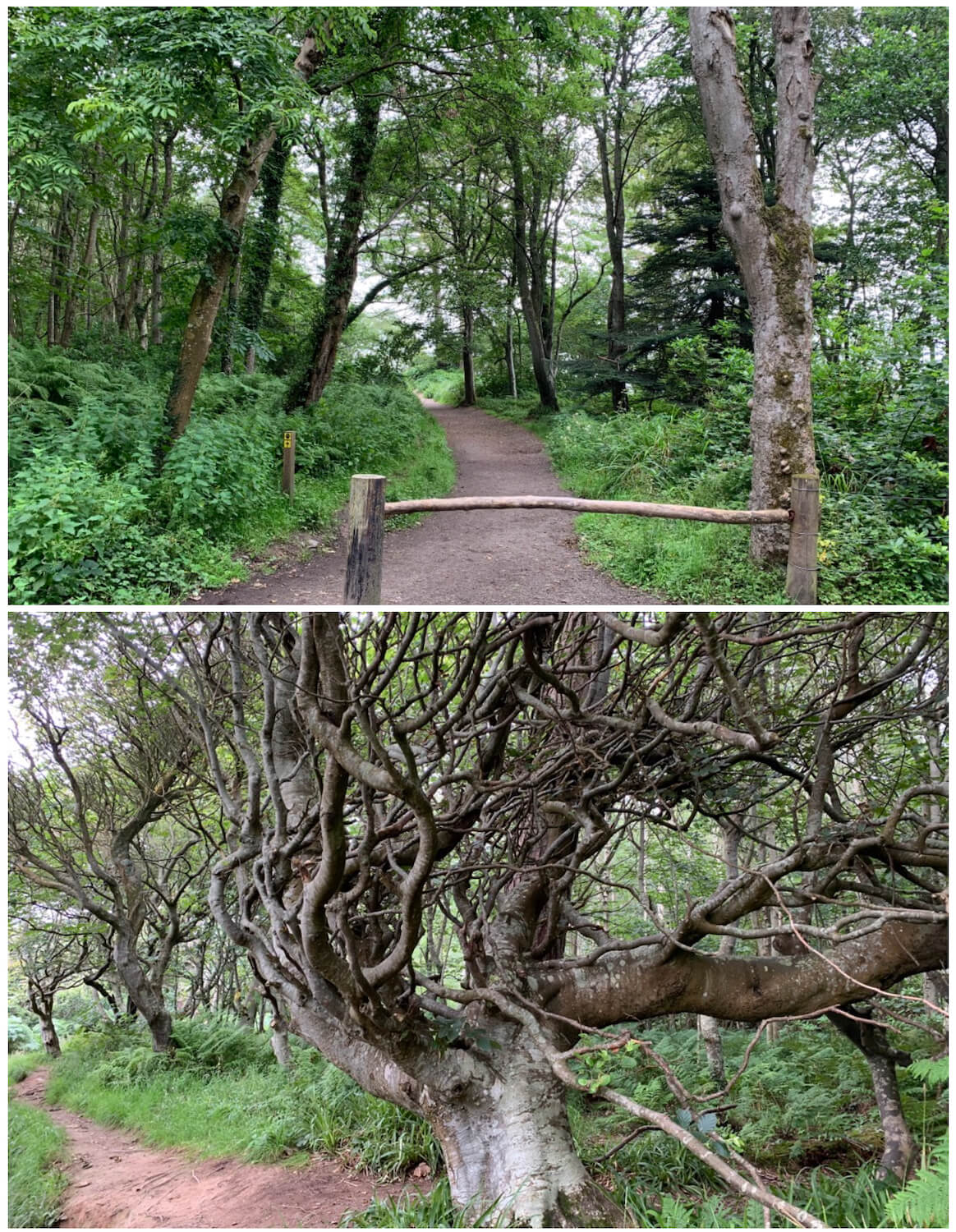 Culzean Castle and Country Park - Woodland Walk Trails
