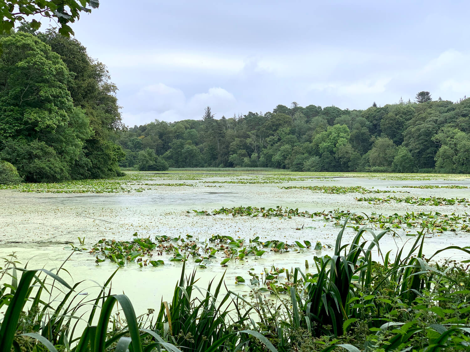 Culzean Castle and Country Park - Swan Pond