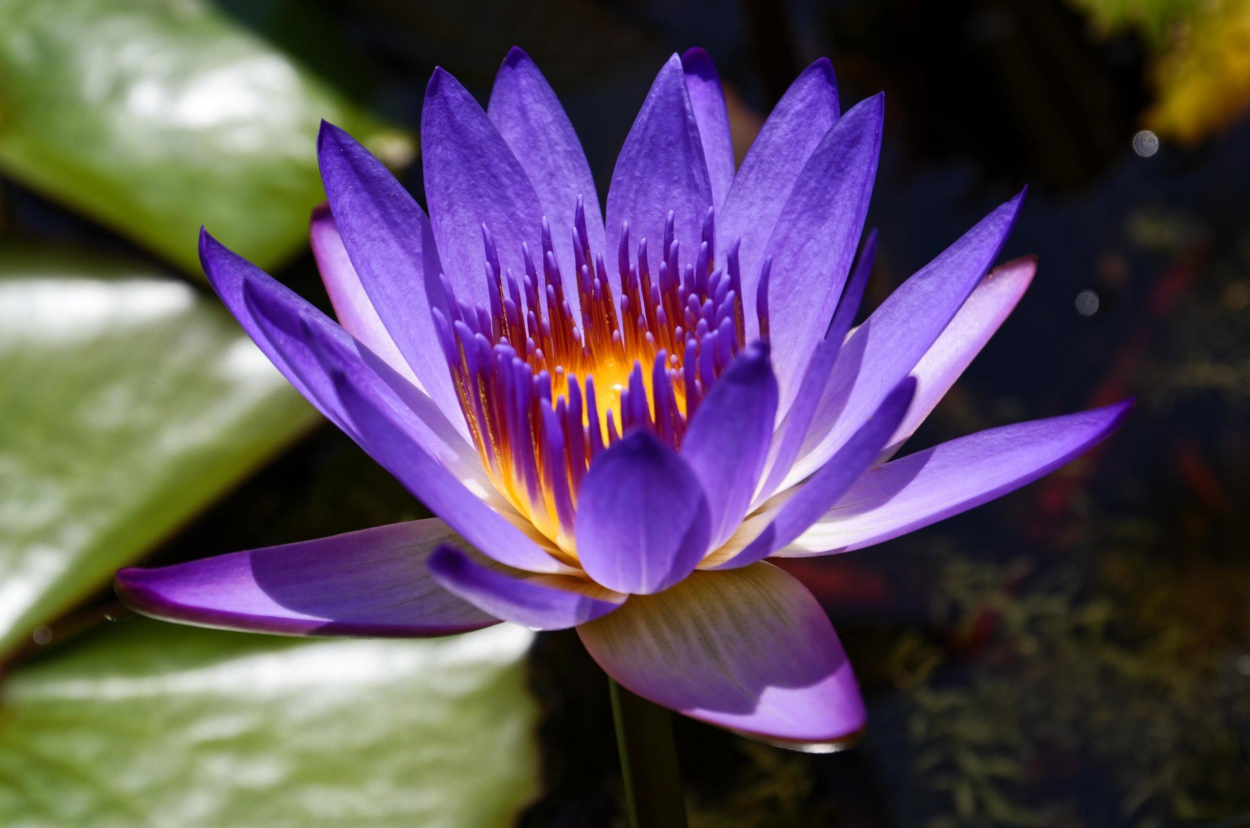 water flower.jpg