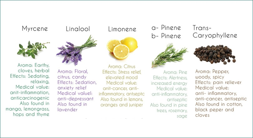 common-cannabis-terpenes.jpg
