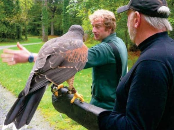 Falconer Damian instructs Randy in the art of releasing the bird.