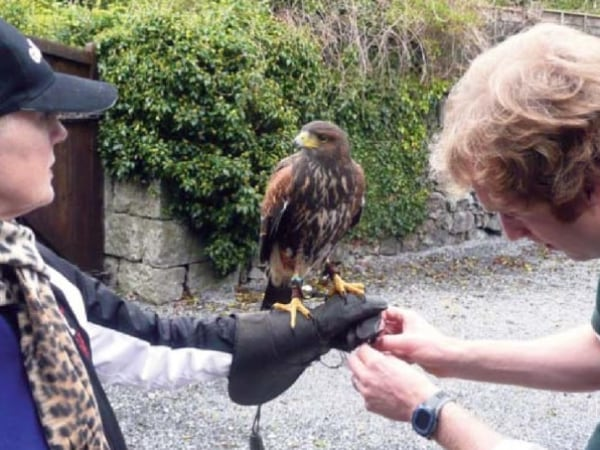 - Ireland School of Falconry Falconer Damian adjusts the jesses as Wilde looks me in the eye as if assessing me.