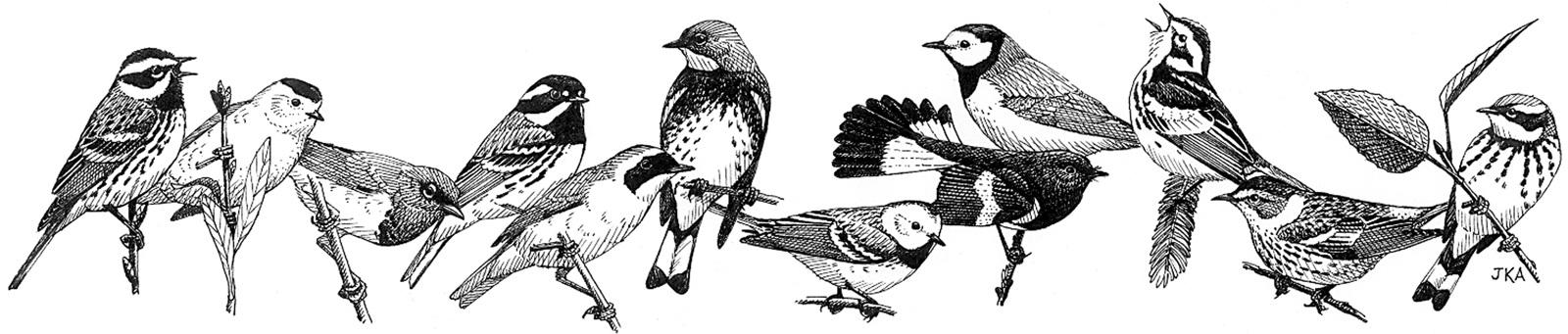 BOS-Banner-12+birds.jpg