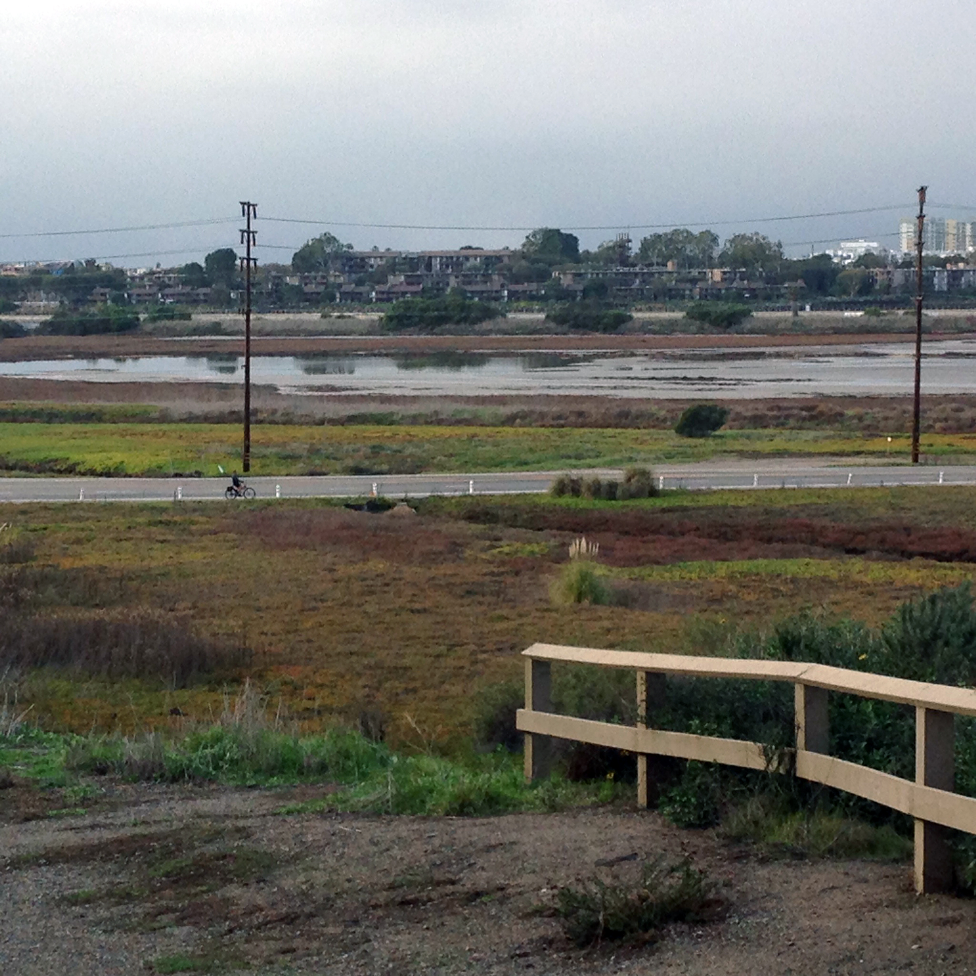 The historic salt panne at Ballona. Standing water covered the entirety of the salt panne for most of the winter.