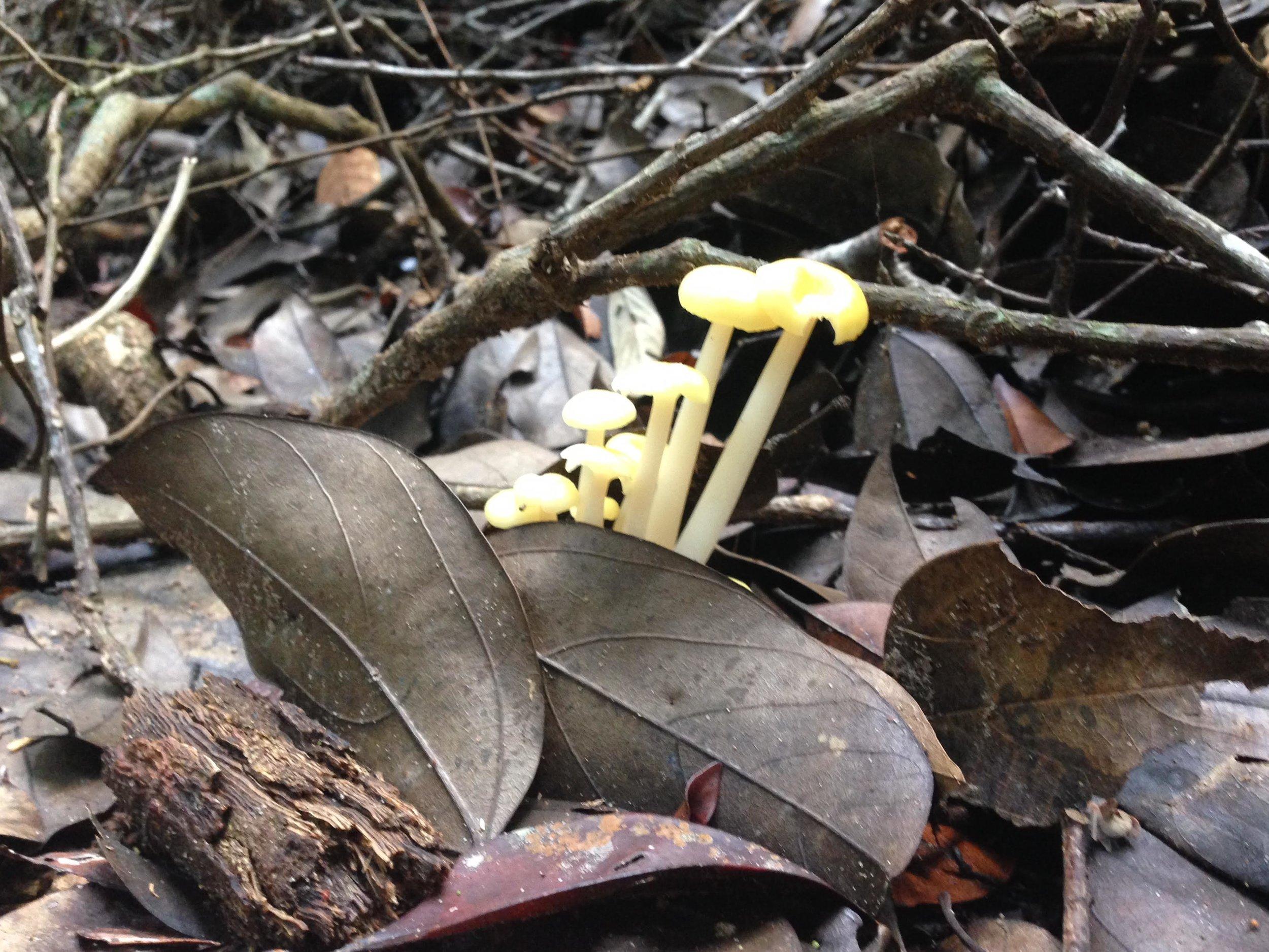Fantastic Fungi along the trails