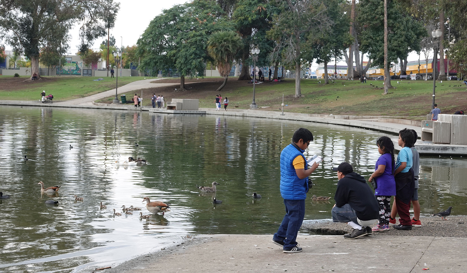 Parents and younger students observing the family of Egyptian Geese at MacArthur Park while one student looks for them in the Kaufmans field guide