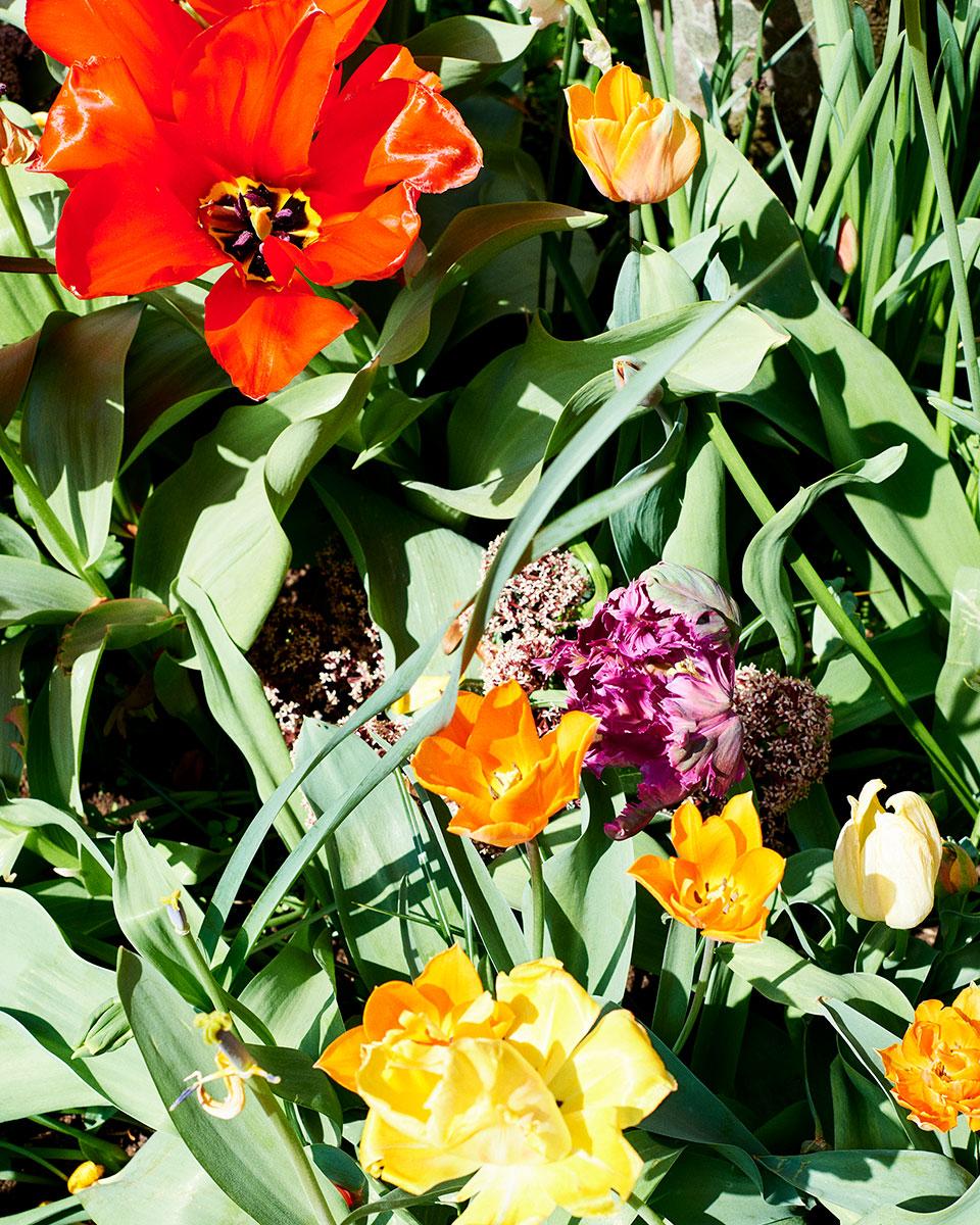 ReneedeGroot - Amsterdam Flowers III.jpg