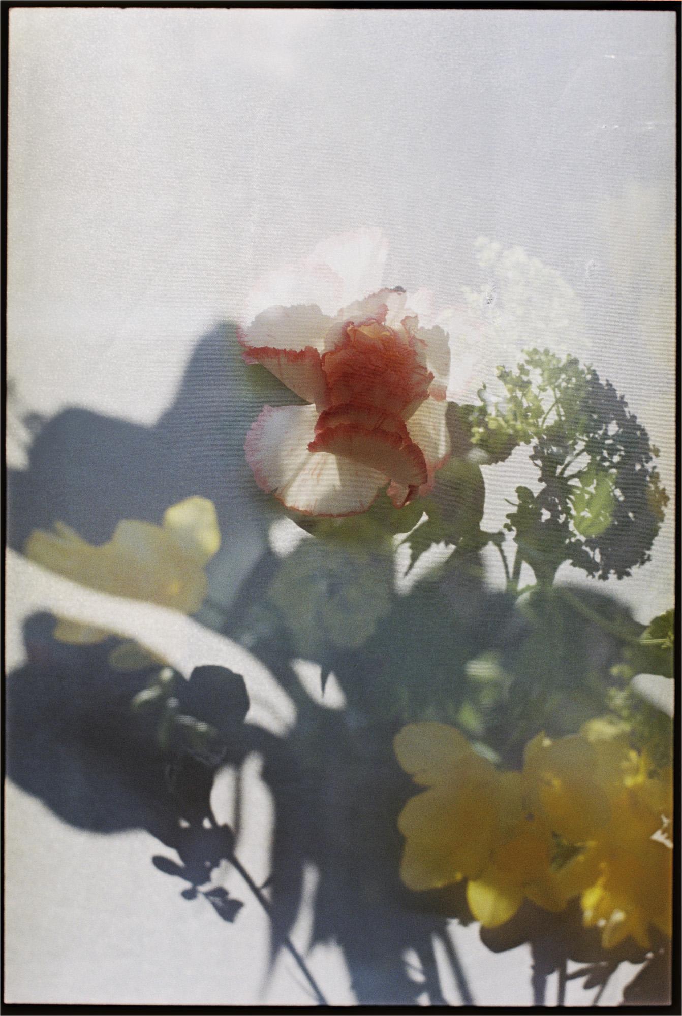 Annelie-Bruijn_bloem-1.jpg