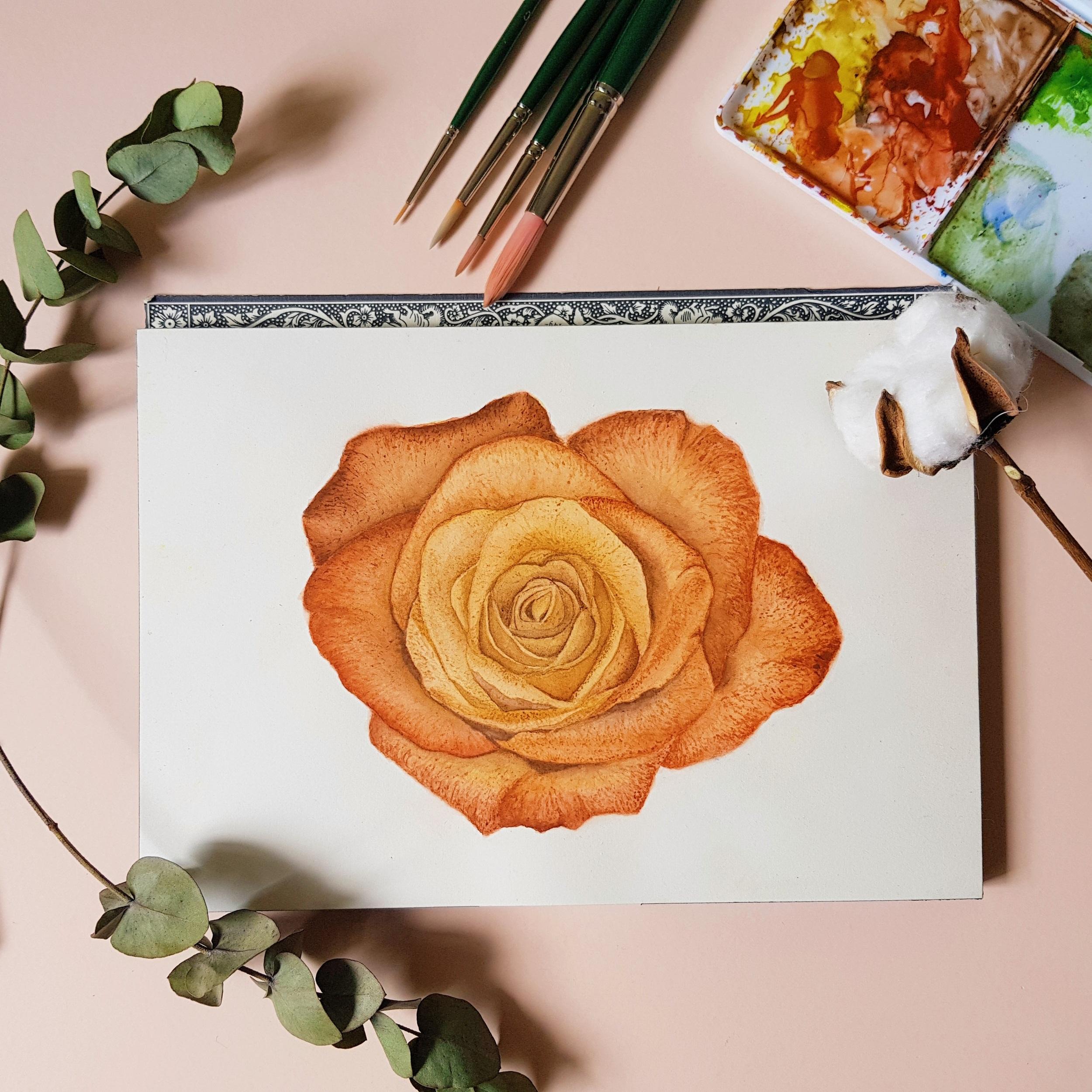 janessasanio-watercolor-botanical-rose.jpg