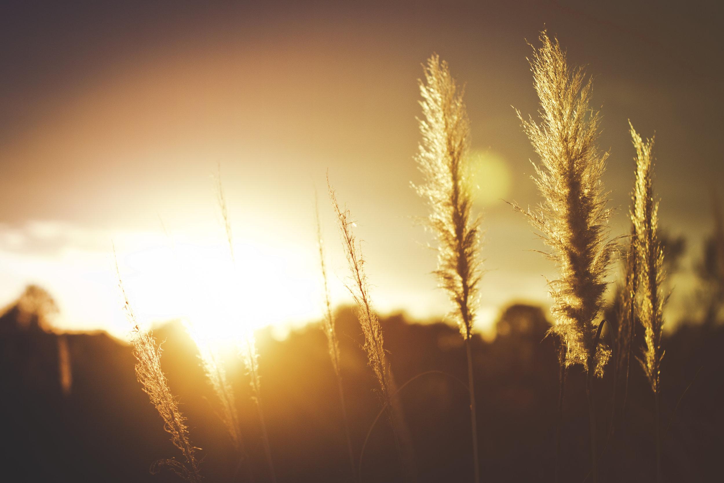 また、私の神は、キリスト・イエスの栄光のうちにあるご自分の豊かさにしたがって、あなたがたの必要をすべて満たしてくださいます。 -- ピリピ人への手紙 4:19