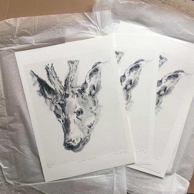 Packing prints for the fleadh #fleadh2019 #artprintsforsale #50x70cm #fleadhcheoil #cailleachbhéara