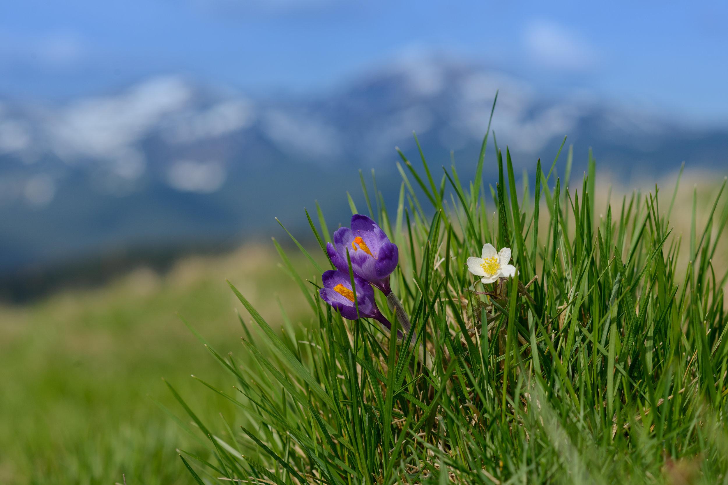 Srpingflowers.jpeg