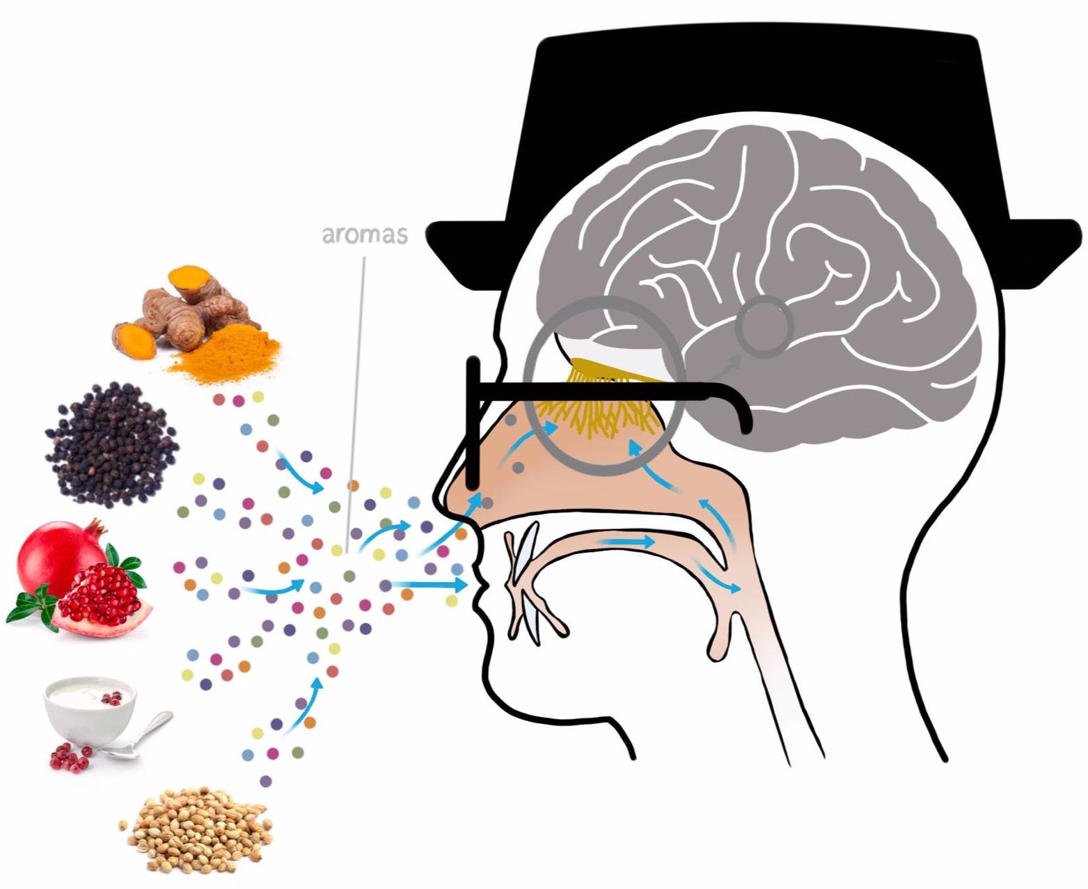 taste-diagram.jpg