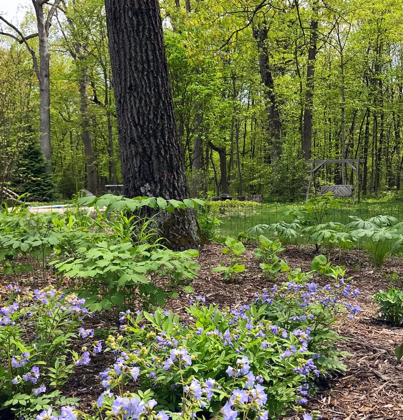 Jamerson woods.jpg