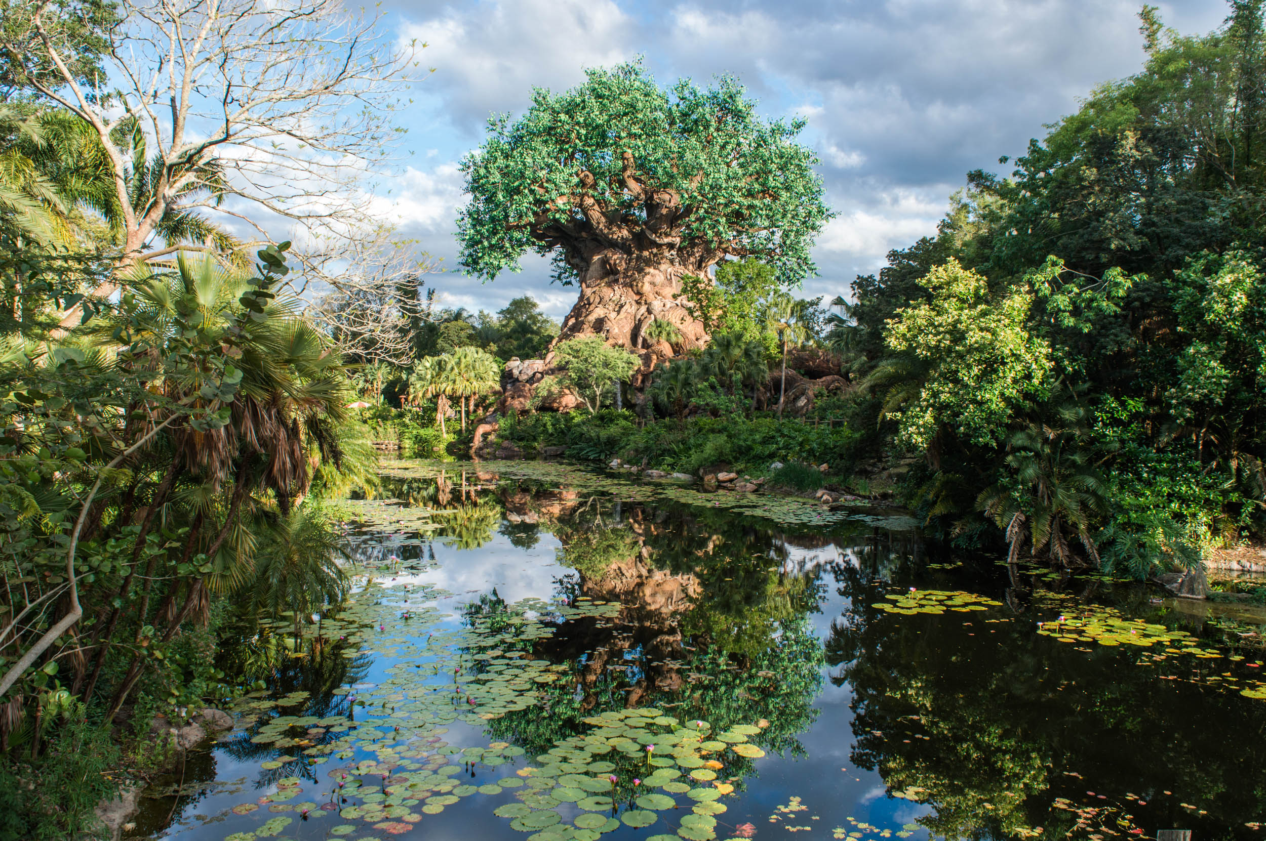 Tree of Life, Disney's Animal Kingdom