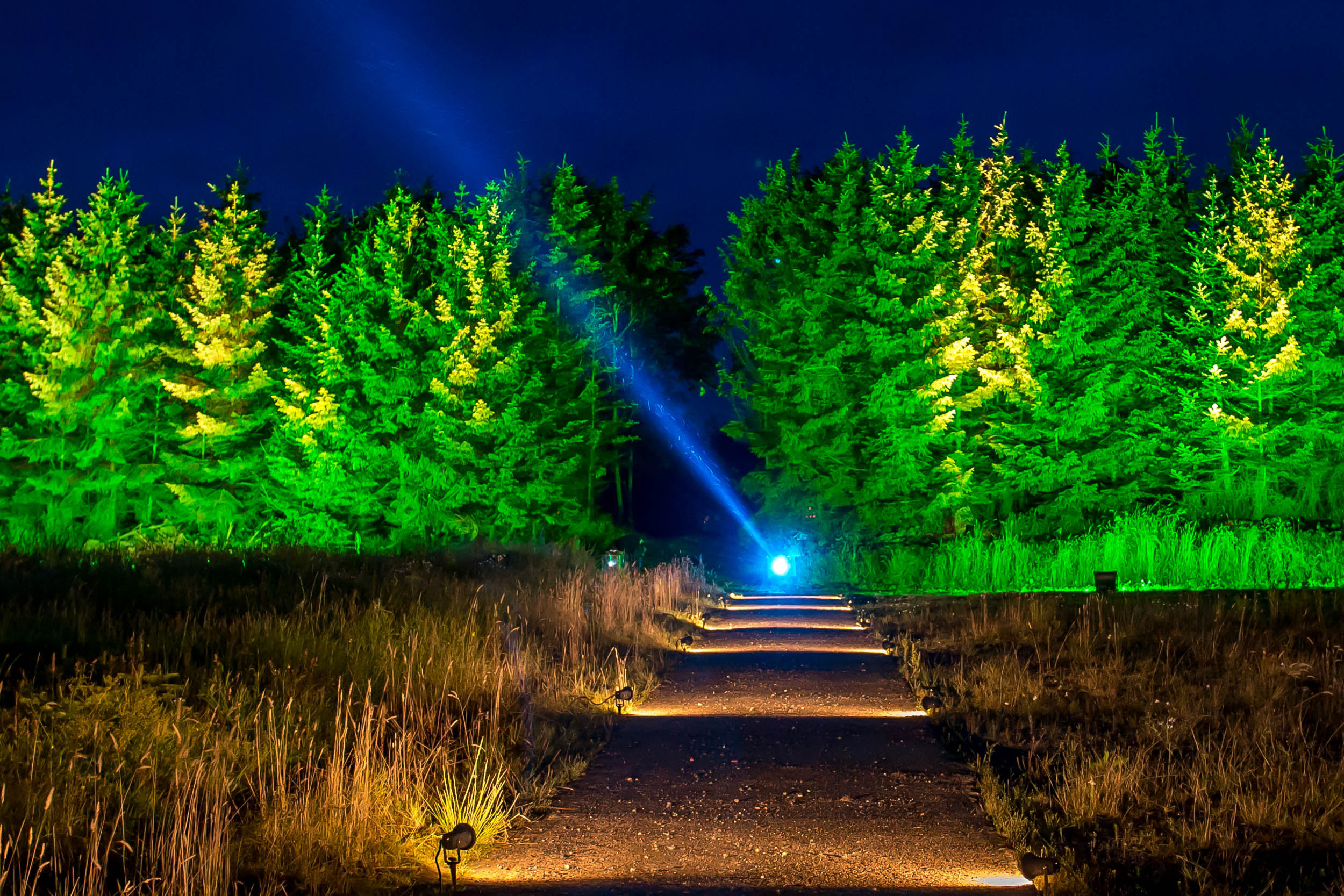 Woodland Light Experience, Balfron Station