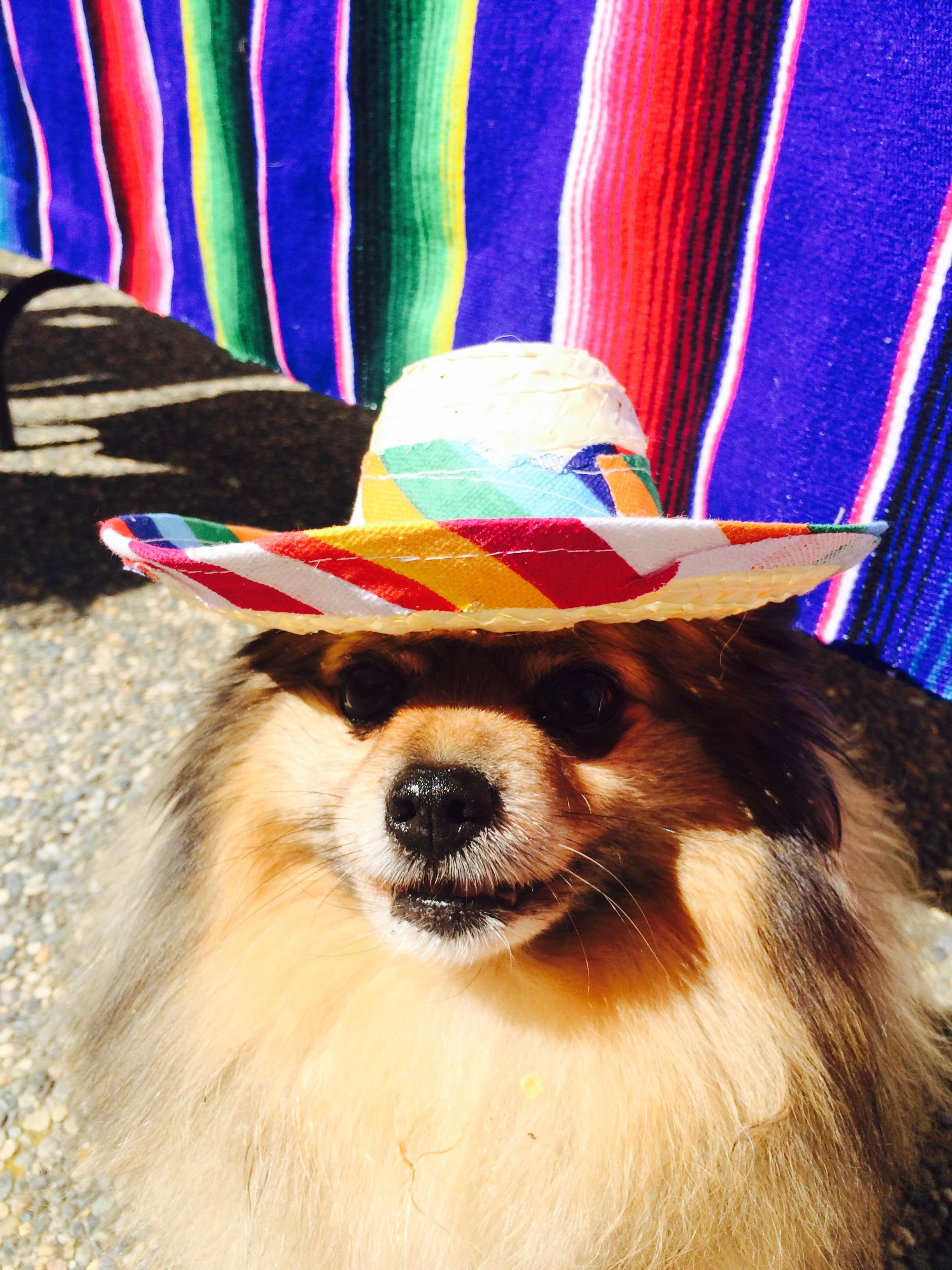 Pi in hat