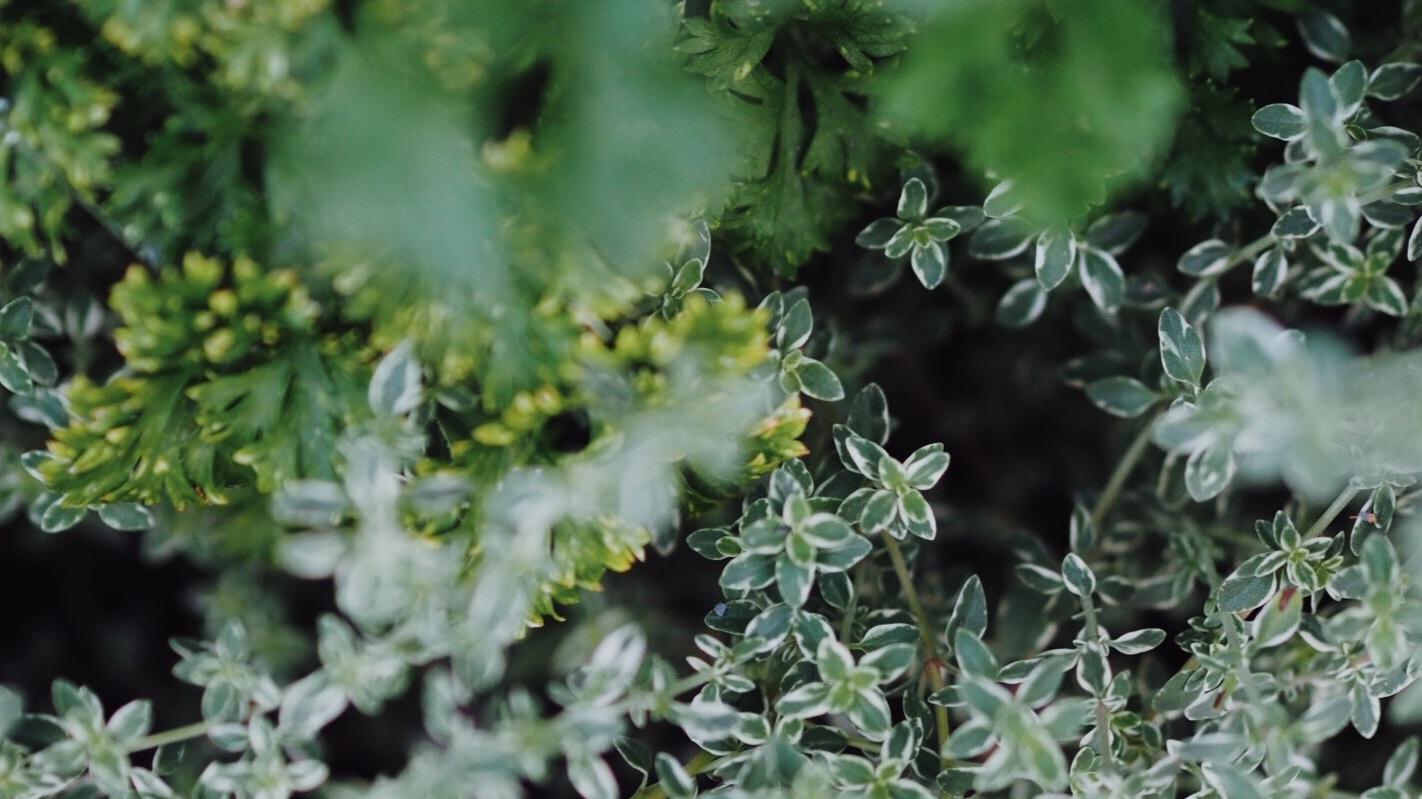 garden-herbs.jpg