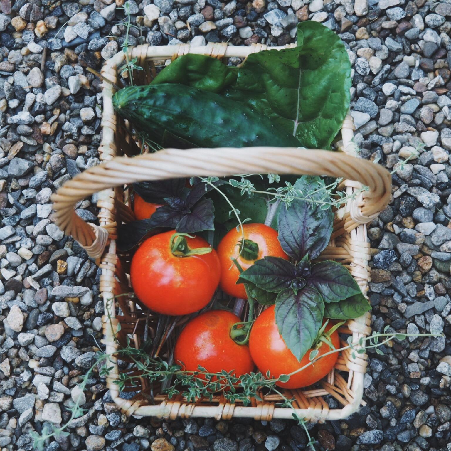 ripe tomato basket.JPG