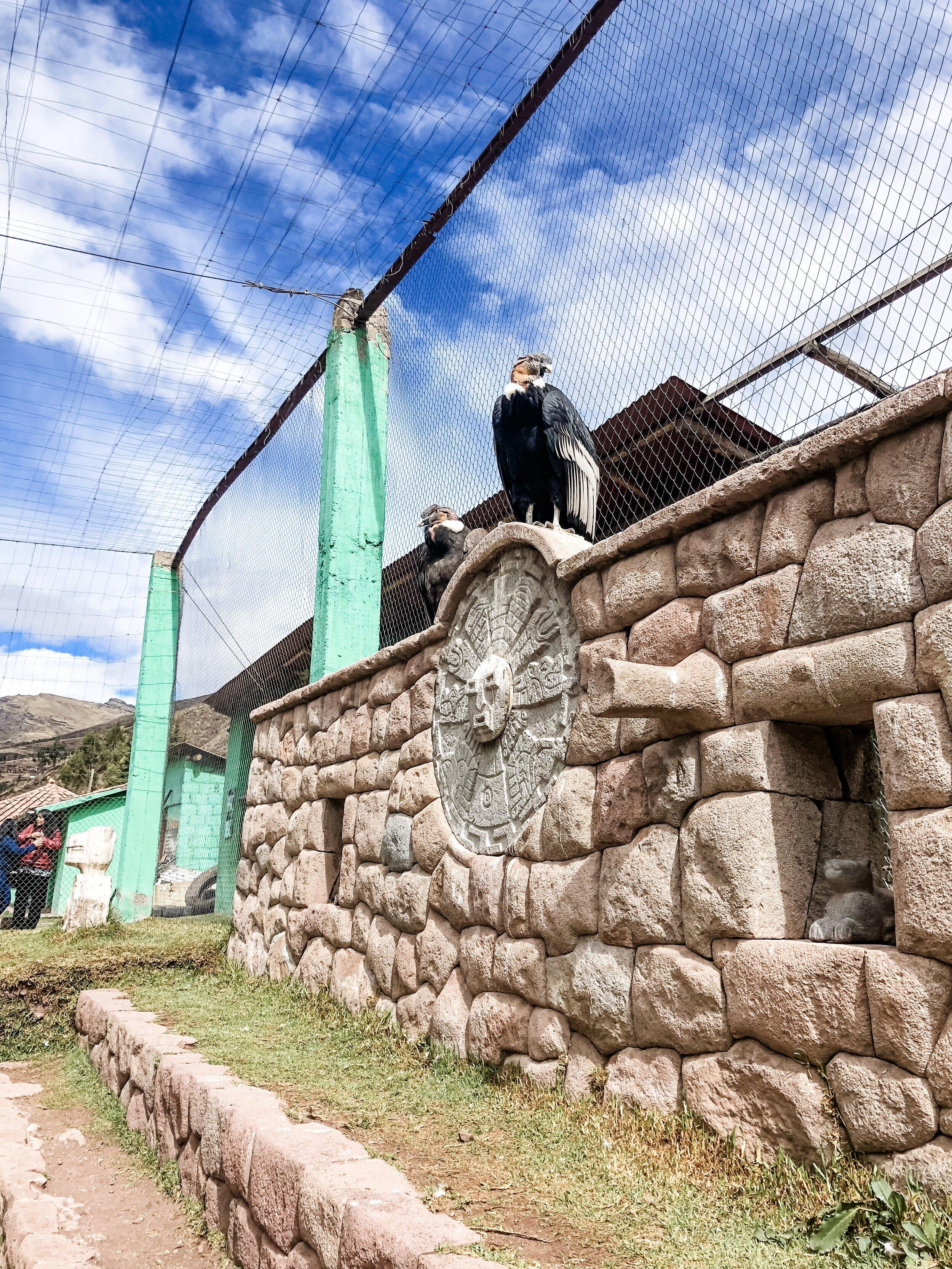 Condor Rehabilitation Center