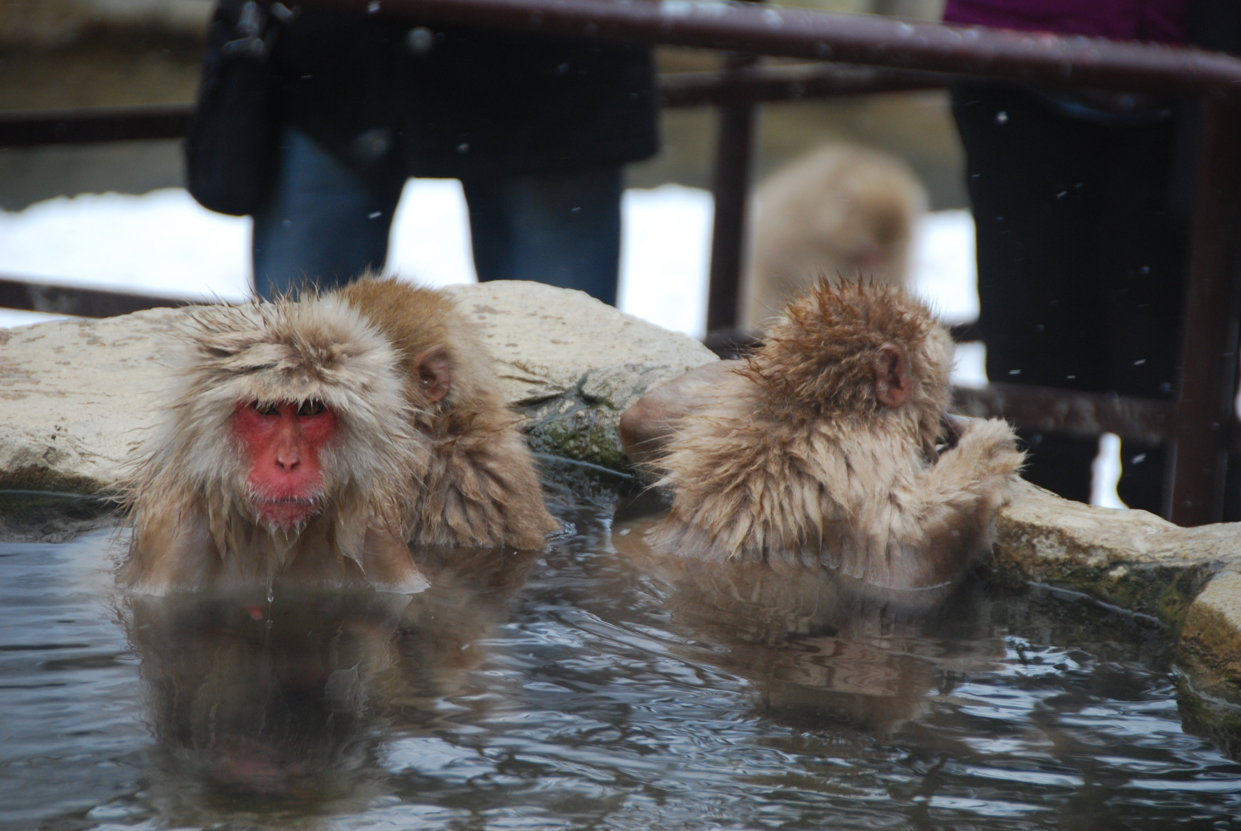 Epic Monkey Bath - Where in the world is this? Have you been here yet?