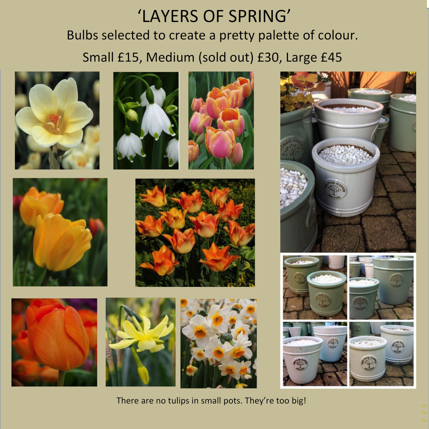 layers-of-spring-bulbs-in-woodlodge-pots-daffodils-tulips-snowdrops-crocuses-pots-and-pateriors-edinburgh.jpg