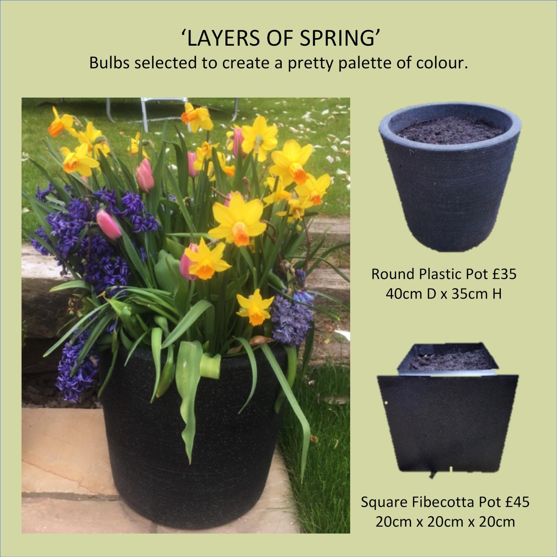layers-of-spring-bulbs-in-black-pots-daffodils-tulips-hyacinths-crocuses-pots-and-pateriors-edinburgh.jpg