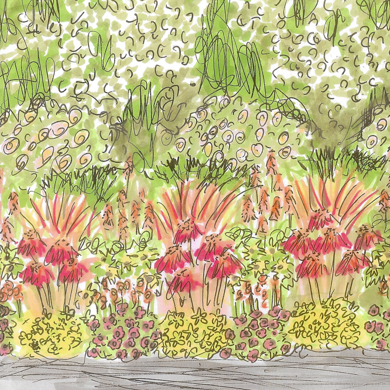 illustration-plant-flower-plant-bed-small-bedding-area-pots-and-pateriors-edinburgh.jpg