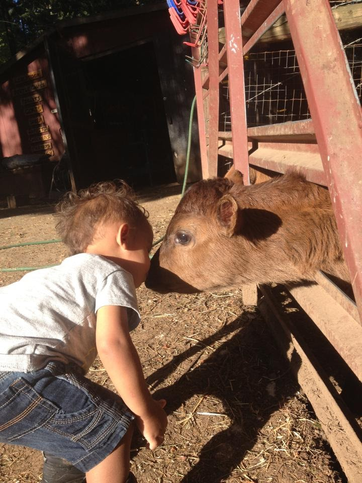 Heart-2-Heart-Farms-CSA-Sherwood-Newberg-Oregon-Field-Trip-Kids-Bottle-Calves-jersey.jpg