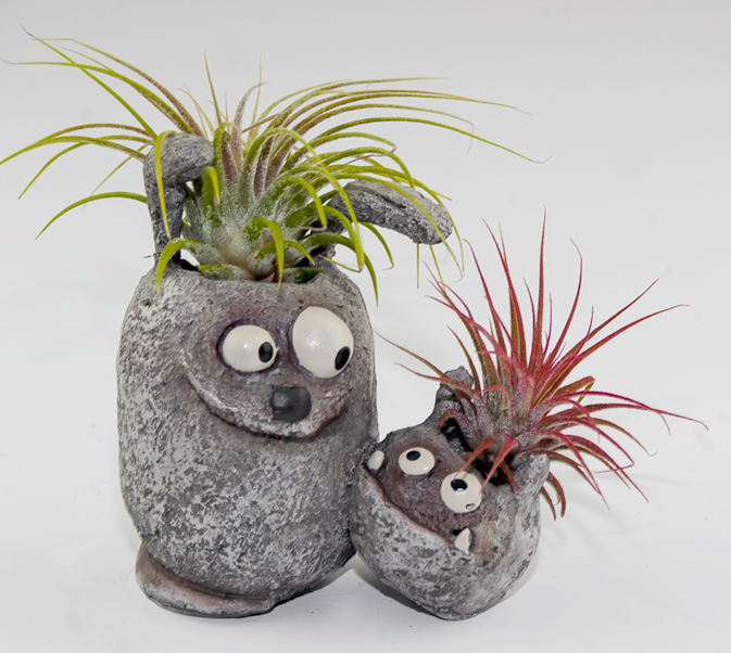 PLANTERS - Click here to shop our wide variety of whimsical air plant planters complete with Ionantha air plant!