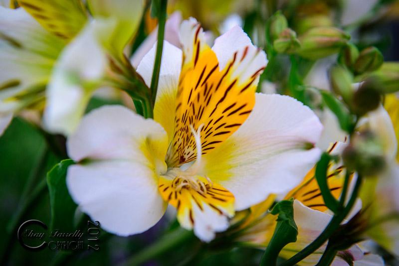 bloom12-2397_120601.jpg