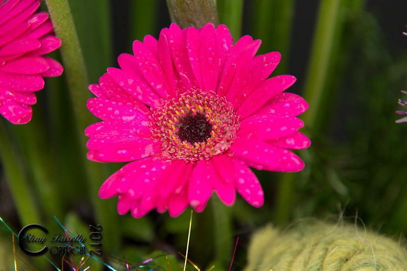 bloom12-2427_120601.jpg