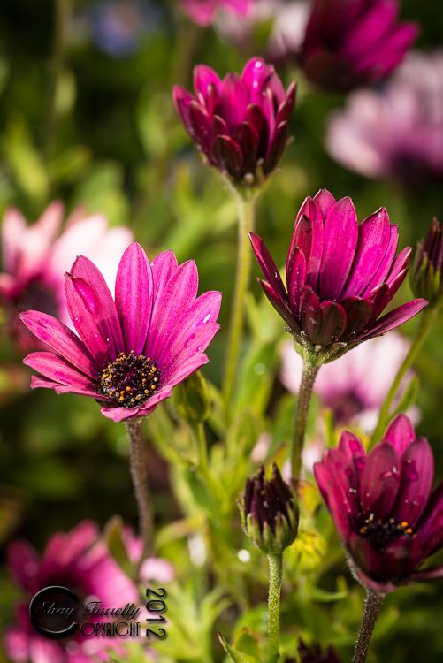 flowergarden-2262_120529.jpg