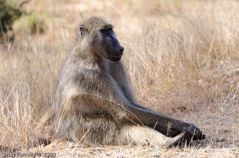 KrugerPark09-672.jpg