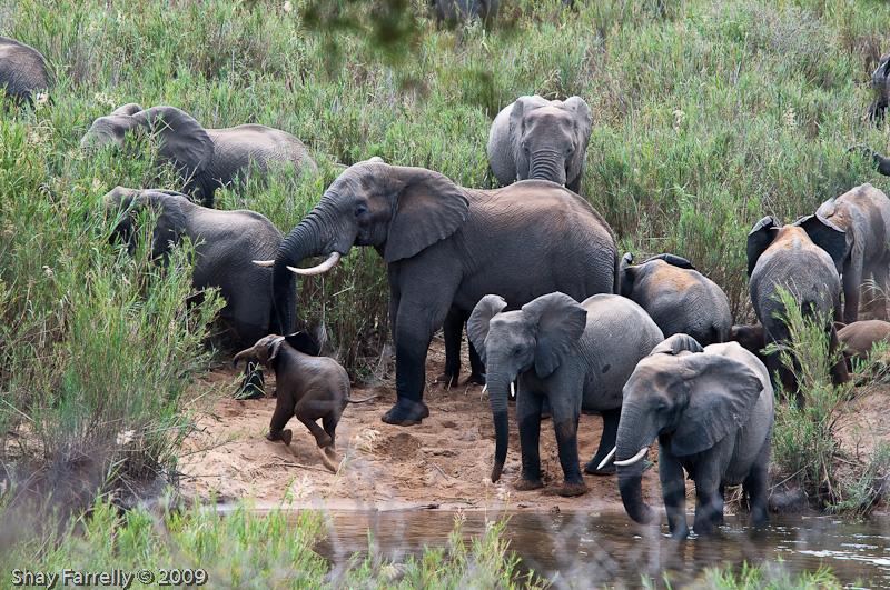 KrugerPark09-724.jpg