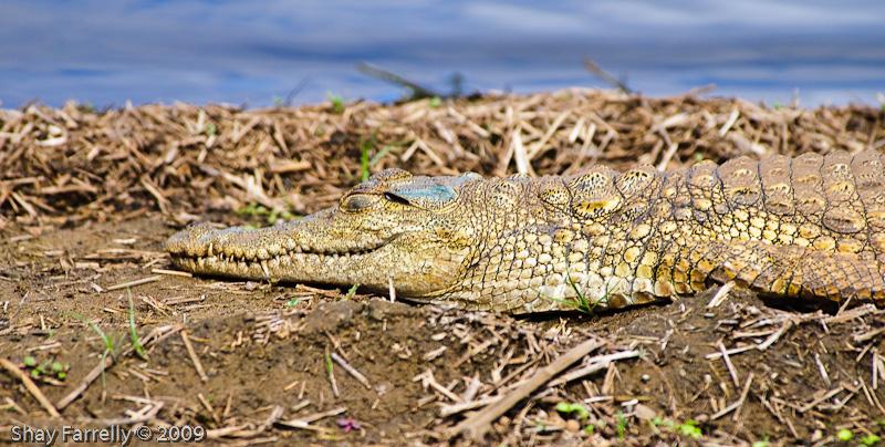 KrugerPark09-766.jpg