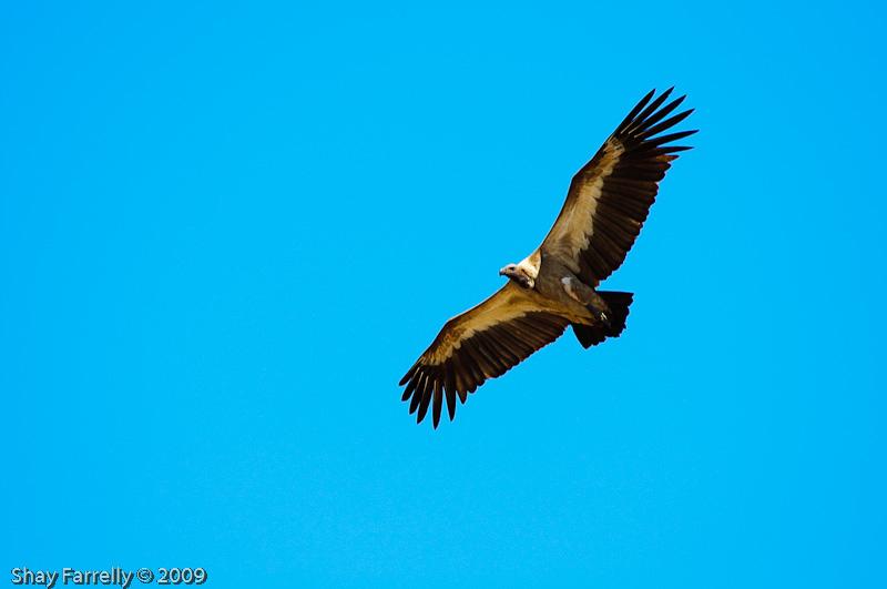 KrugerPark09-963.jpg