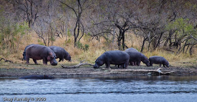KrugerPark09-144.jpg