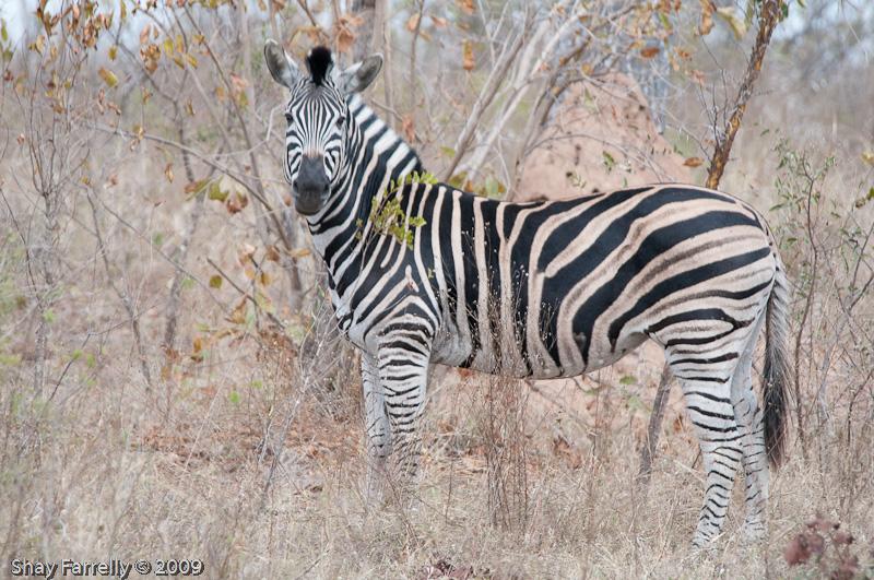 KrugerPark09-174.jpg