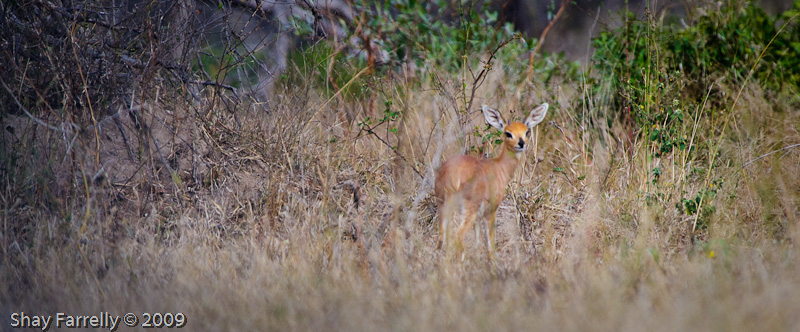 KrugerPark09-192.jpg
