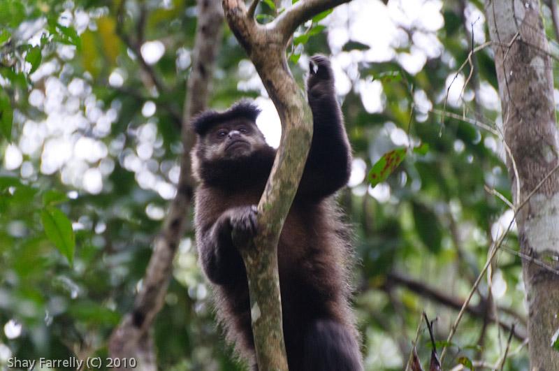 IguazuFalls-8.jpg