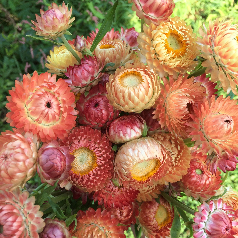 floral - 7.jpg