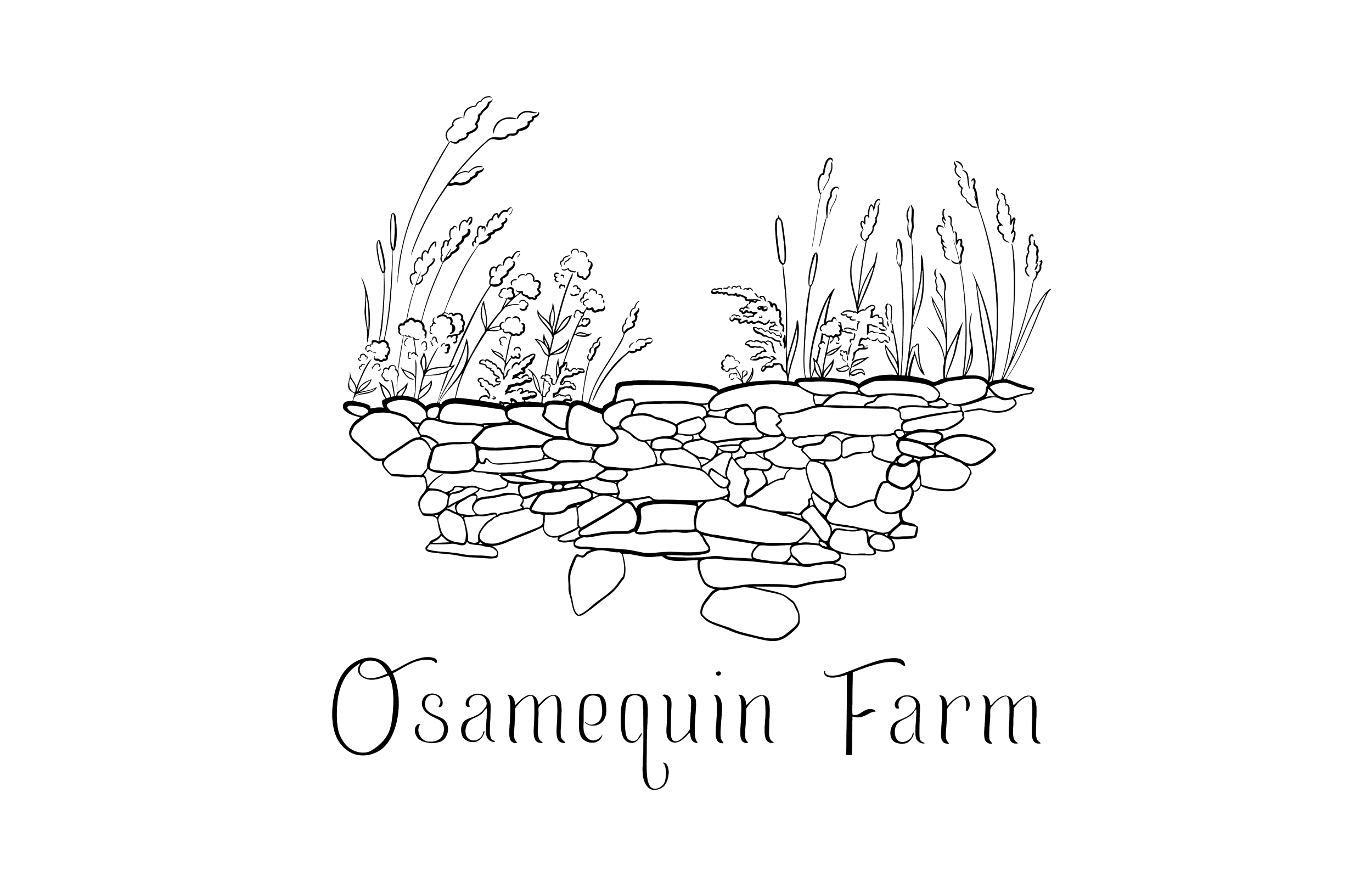 Our logo - Our logo is a representation of the view of the marsh from the bridge over Walnut Street, which in pre-colonial times was known as the long dam. The Wampanoag people created the dam to control the waters of the Runnins River that still flow through the farm and create a vast marsh. Later inhabitants added the stone wall, and then the paved street that we use as the farm driveway today. The image also includes goldenrod and joe-pye weed, which grow wild and abundantly along this marsh and others on the property, and throughout the northeast. These two plants are often seen growing together, and they are beloved by pollinators and floral designers alike.Our hope is that the logo we use today brings together the many stories at play at Osamequin Farm - the first peoples' footprint on the land, the colonial era modifications, and the symbiotic relationship between the farmers and the native landscape.